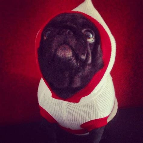 pug items uk 192 best images about i pug products on