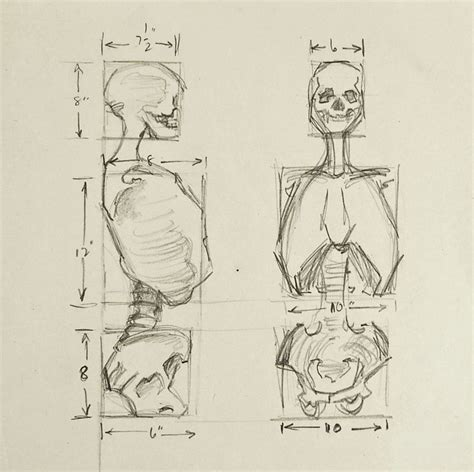 And Anatomy Drawing