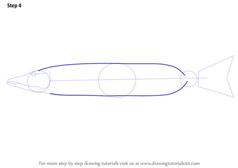 learn how to draw a pike fishes step by step drawing