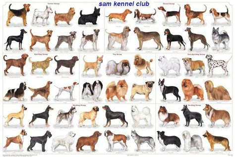 all kinds of dogs different types of dogs quotes
