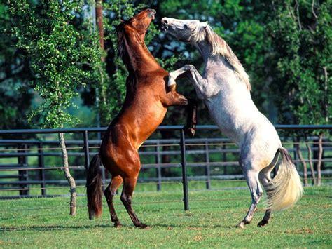 fotos de penes finos caballos finos www imgkid com the image kid has it