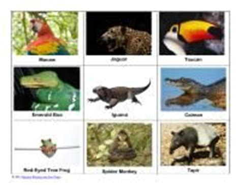 printable rainforest animal cards 1000 images about south america on pinterest