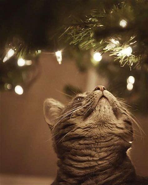 lights cat best 25 cats ideas on merry