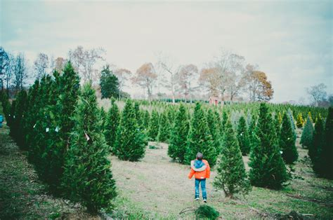 will tree farm tree farm