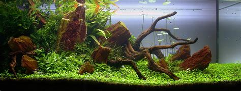 tobias coring and aquascaping aqua rebell