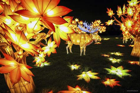 lights at the zoo toledo lanterns to brighten toledo zoo at fall events the blade