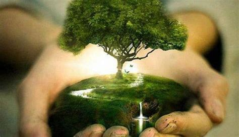 Plant Trees Save Earth Essay by Save Trees Essay Save Earth For Students And