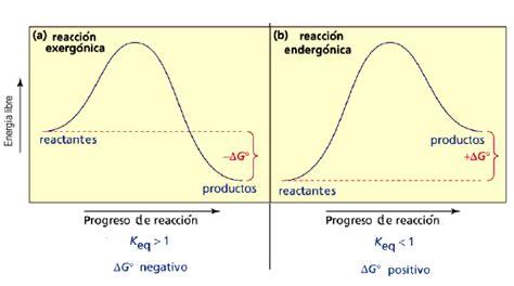 reacciones exotermicas y endotermicas biologia 1 cibertareas biologia rx endot 233 rmicas y exot 233 rmicas