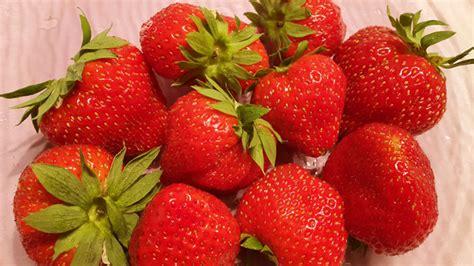 alimenti privi di istamina fragole il cibo delle fate pu 242 scatenare allergie