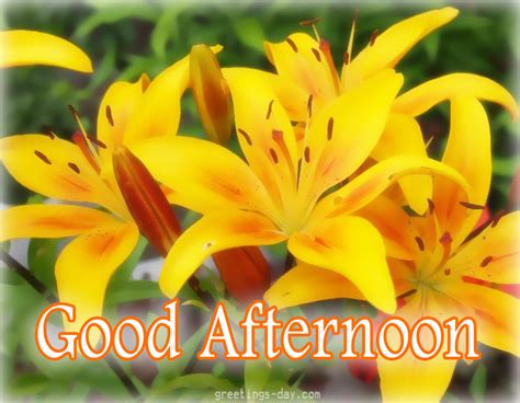 good afternoon cards pictures holidays