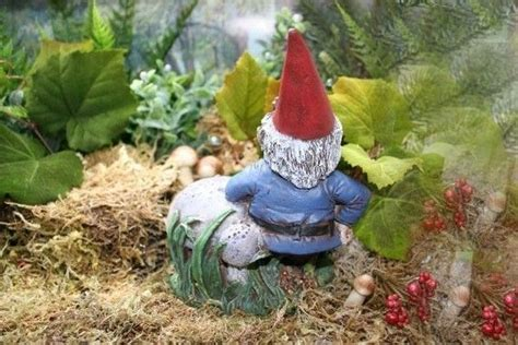 cute garden gnomes lawn gnomes cute bing images