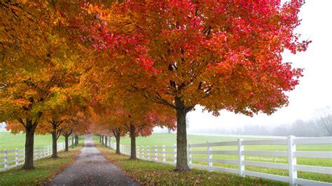 of maryland colors take a maryland fall foliage trip visit maryland