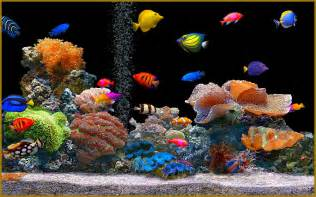 Small Desktop Saltwater Aquarium Myths About Keeping An Aquarium At Home