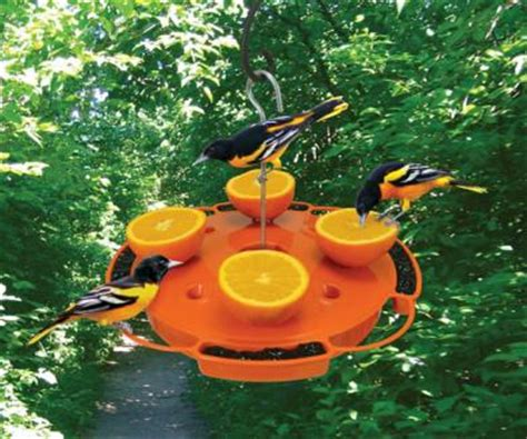How To Attract Baltimore Orioles To Your Backyard by Oriole Bird Feeders Jam Feeders How To Attract Orioles At