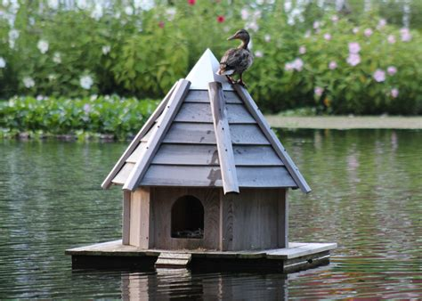 domestic duck house plans domestic duck house plans