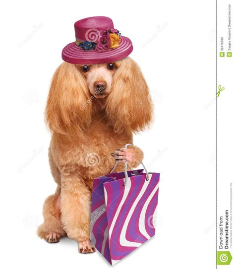 puppy shopping with shopping bags royalty free stock images image 38479369