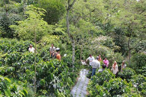 Maharaja Organic Gayo 200g Bubuk maharaja coffee roaster jakarta green beans kopi hijau