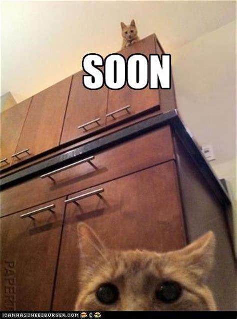 Soon Meme - funny meme soon 5 dump a day