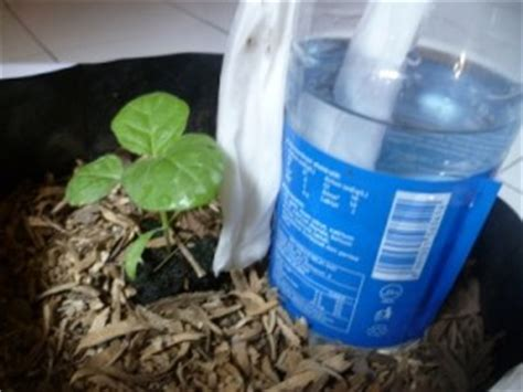 cara membuat hidroponik tetes membuat sistem irigasi sederhana pada tanaman hidroponik