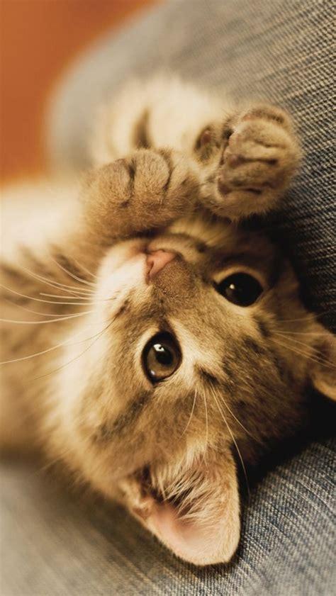 kitten wallpaper for iphone 6 iphone 5 wallpaper kitten mobile phone wallpapers