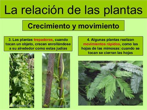 olguchiland las plantas ii cifras y letras las plantas iii funci 243 n de relaci 243 n y