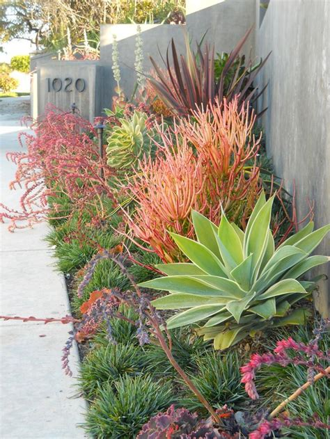 contemporary drought tolerant garden it s time to start