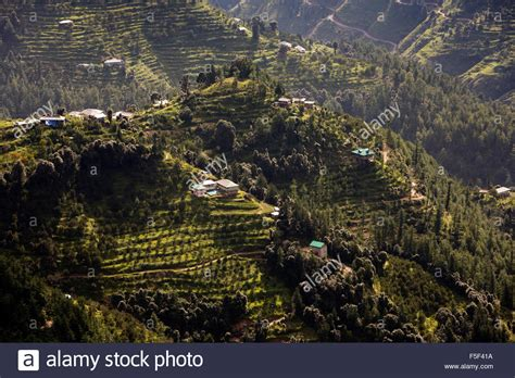 The Terrace Shimla India Asia india himachal pradesh shimla simla terraced apple