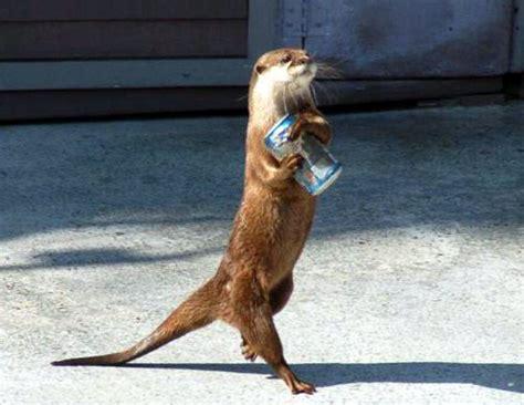 imagenes interesantes de animales fotos curiosas y graciosas de animales dogguie