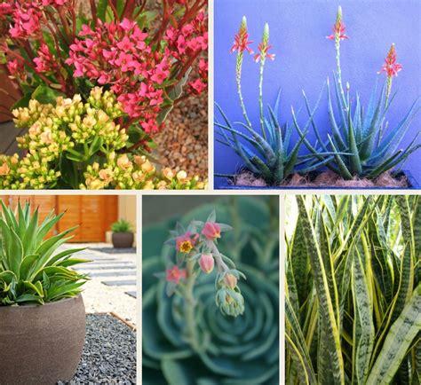 Beginner S Guide To Growing Succulents Garden - a beginner s guide to growing succulents flower power