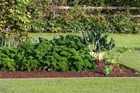 come seminare il prezzemolo in vaso coltivazione prezzemolo orto