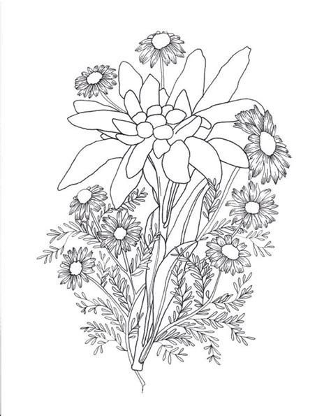 edelweiss flower coloring page edelweiss chamomile tattoo sketch sketches tattoo and