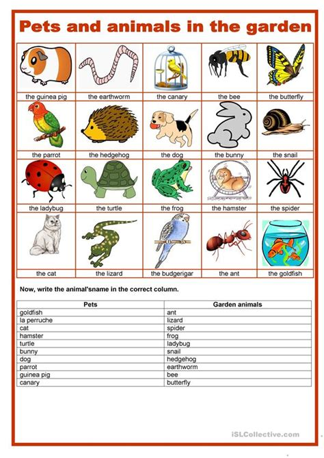 picture dictionary pets  garden animals english esl