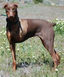 his name was my with a remarkable doberman pinscher books 1000 images about now i do my own his name is