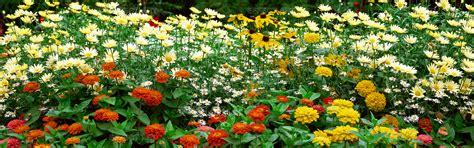 immagini paesaggi fioriti photographer foto fiori paesaggi fioriti n 9
