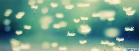 dandelion facebook cover timeline photo banner  fb