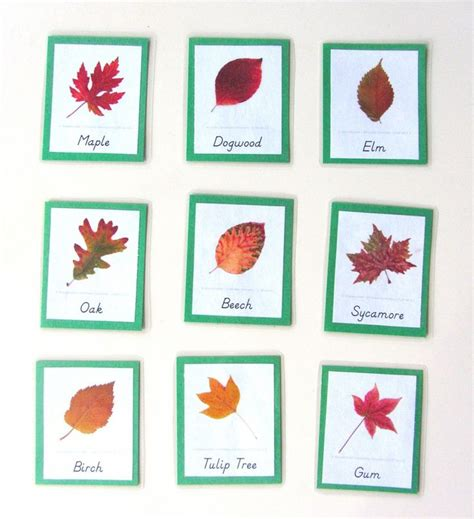 montessori tree printable 310 best fall leaves images on pinterest day care fall