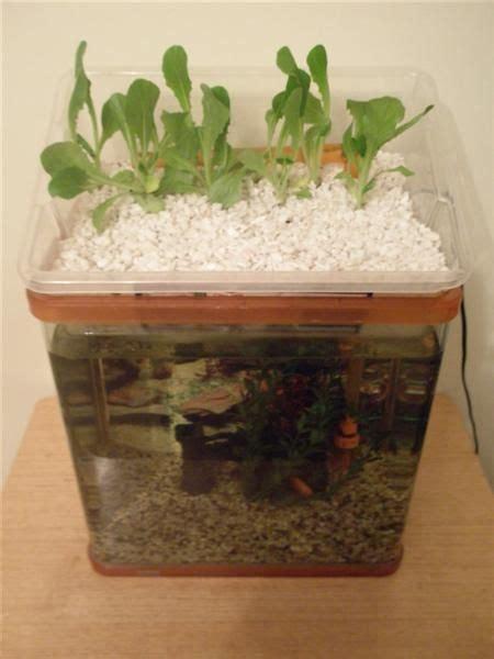 small aquaponic unit  steps instructables