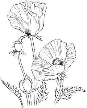 poppy wreath coloring page 10 poppy crafts for remembrance day