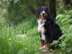 can dogs get poison 15 best teacup breeds and what you must about them