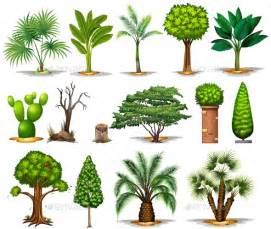 different types of trees different types of trees by blueringmedia graphicriver