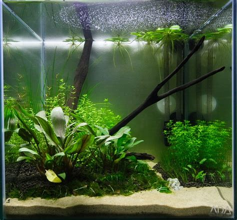 cube aquarium aquascape 1ft cube non co2 planted aquascape