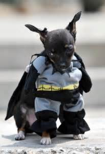 Dog batman costume halloween the best dog halloween costumes ever