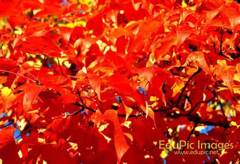 fall colors fall colors desktop wallpaper wallpapersafari