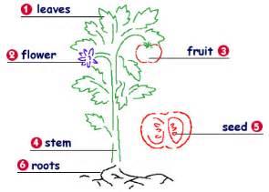 claw the plant kingdom