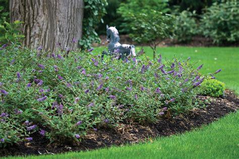 10 Great Landscape Plants Lo Behold Blue Chip Landscape Plants