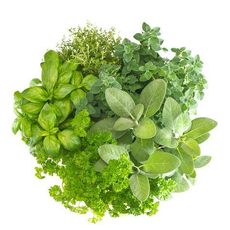 Friends Floor Plan by All About Herbs Hellofresh Blog