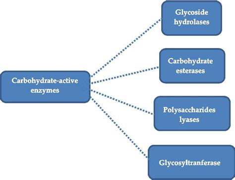 carbohydrates enzymes carbohydrates from biomass sources and transformation by