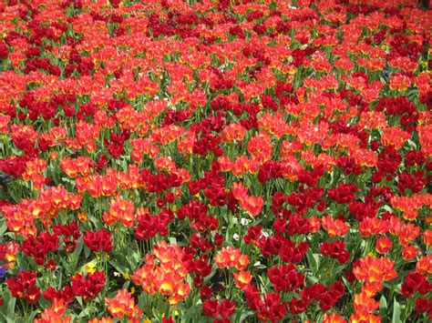 Hydrangea by Fondos Escritorio Flores De Jard 237 N Rojas