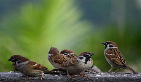 when is day celebrated in the world when and why is world sparrow day celebrated worldatlas