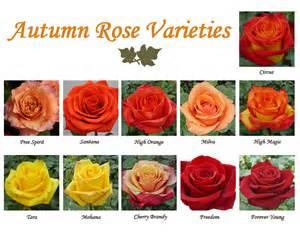 autumn flowers season